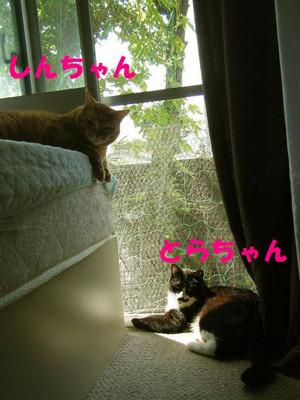 Attachment01_copy1