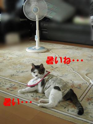 240718_004_copy