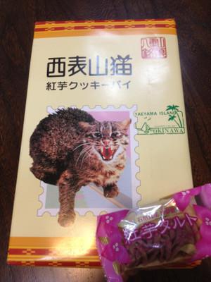 241023_yamaneko