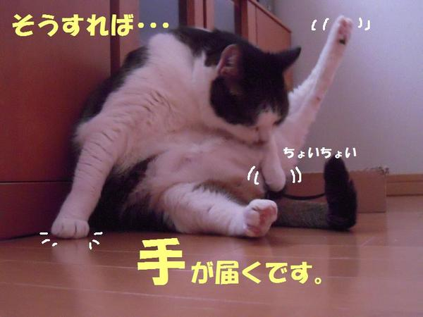 0306_0091_3