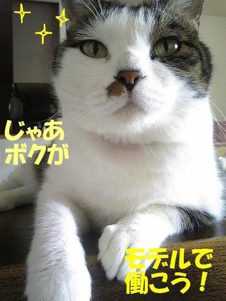 Image27211