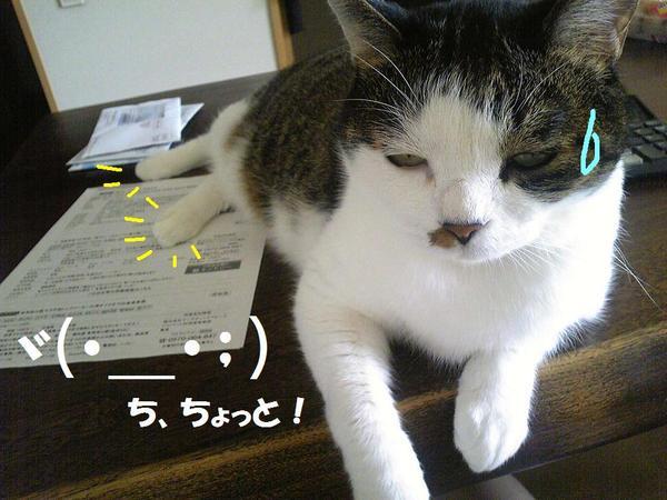 Image27311