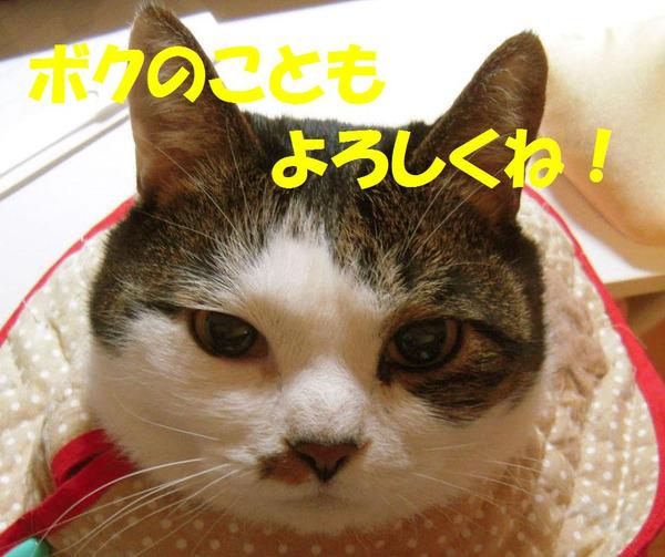 231130_004_copy_copy1