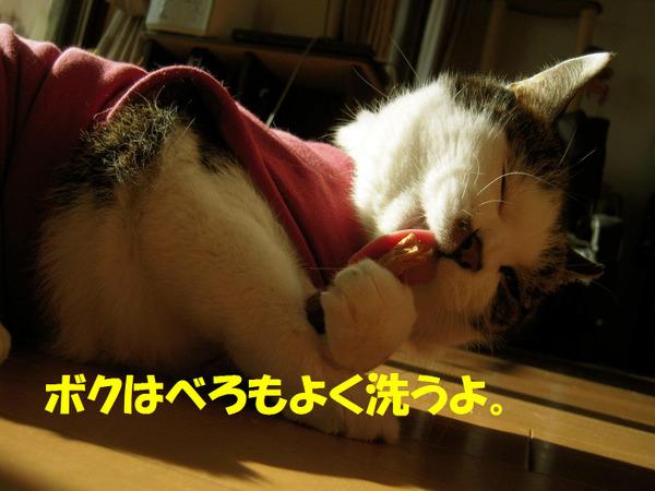 240128_006_copy1