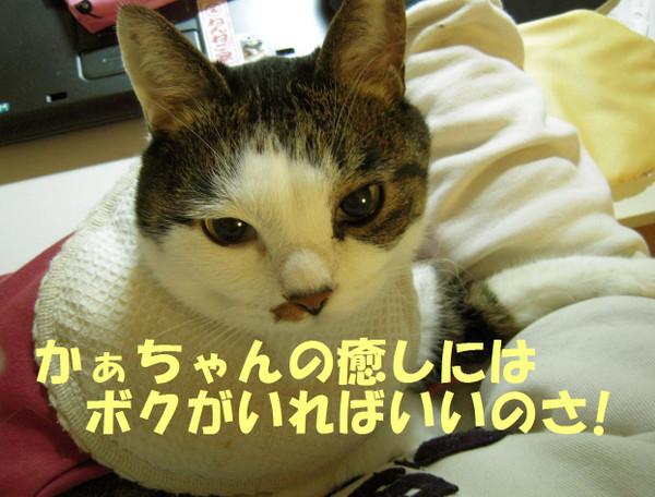 240309_006_copy1