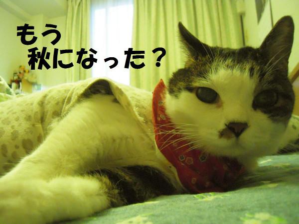 241003_009_copy1